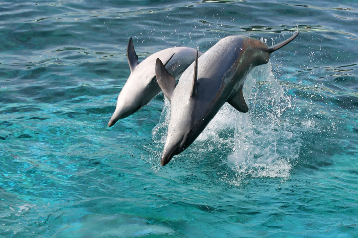 Dolphin Cove Negril